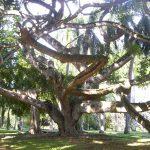 stockvault-garden-of-peradeniya106993